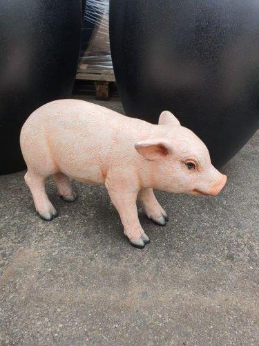 Fiberglass - Piglet Standing- ( Size: 39 x 18 x 25cm)