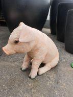 Fiberglass - Piglet Sitting - ( Size 32x20x39cm)