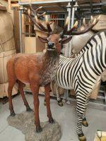Red Deer Stag- fiberglass lightweight
