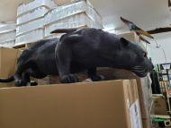 Black Panther - Fiberglass