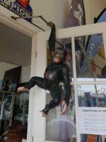 Hanging Monkey - Fiberglass