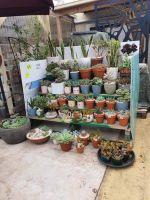 Succulens - Cactus - and planter .